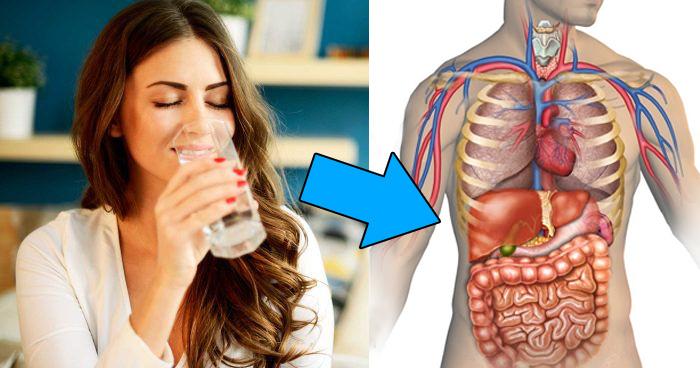सुबह खाली पेट में पानी पीने के फायदे