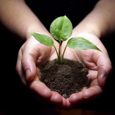 आर्गेनिक फार्मिंग (जैविक खेती) क्या है